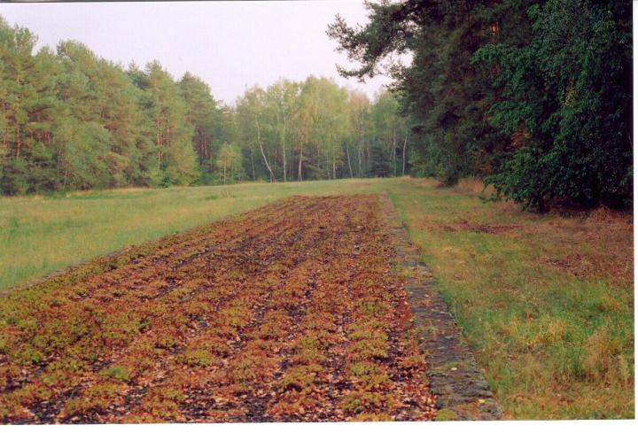 chelmno forest graves